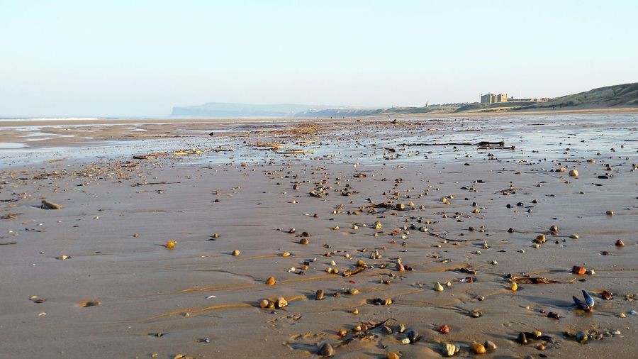 Shore Water