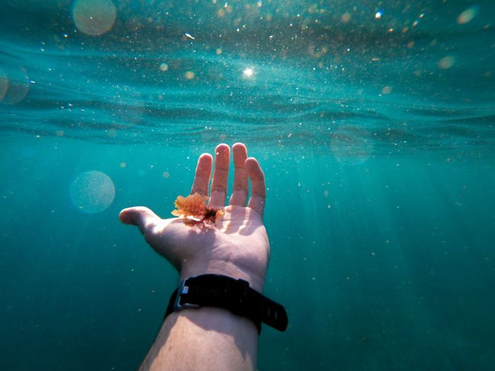 Cropped hand of man holding plant undersea