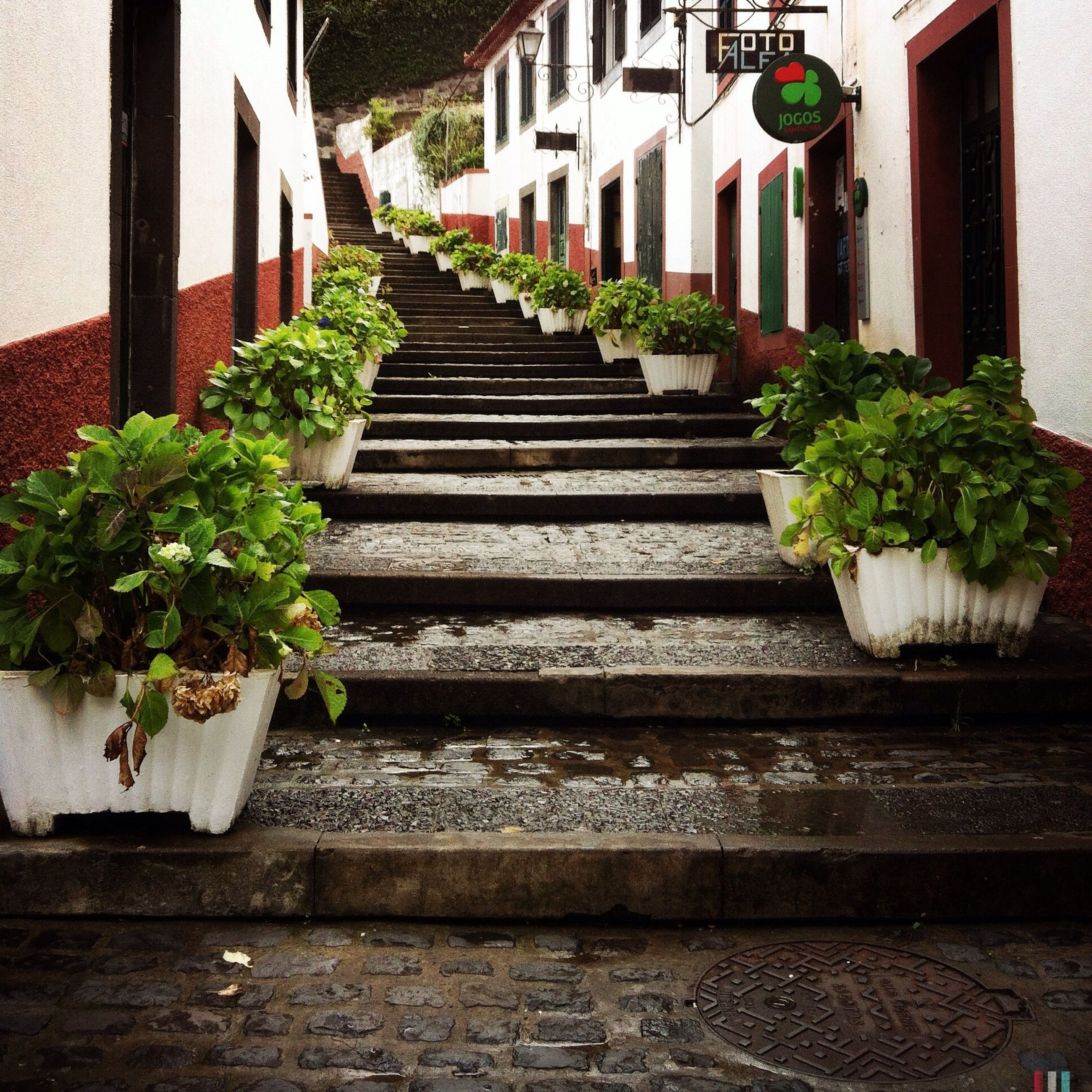 building exterior, architecture, built structure, plant, steps, potted plant, house, the way forward, residential structure, growth, steps and staircases, wall - building feature, residential building, staircase, leaf, wall, green color, outdoors, building, no people