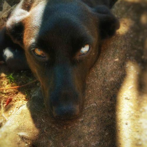 One Animal Eyes