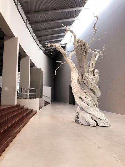 Arken Room Tree Indoors  Architecture No People Built Structure Nature Building Wall - Building Feature Museum Modern Sunlight Day Flooring
