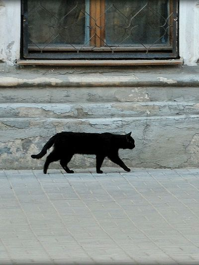 Side view of a black cat on footpath