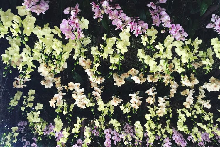 Ceiling of Orchids , Wedding Dream