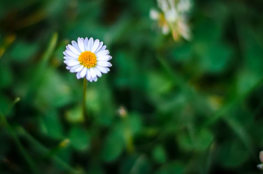 Nikonphotography Nikon Flower Fragility Petal Nature Freshness Flower Head Growth Beauty In Nature Outdoors Day Close-up Plant No People Blooming