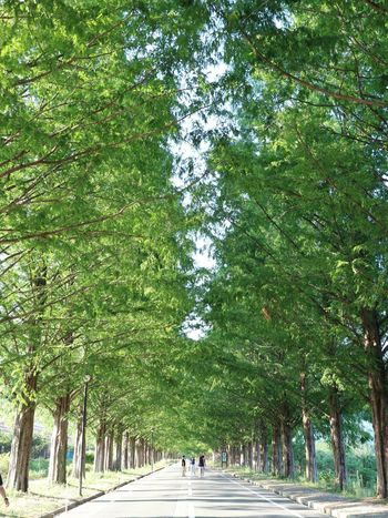 Roadside Tree Sky And Trees Tree Plant Green Color Day Growth Nature Real People Group Of People Outdoors Beauty In Nature Branch Treelined Sunlight Incidental People