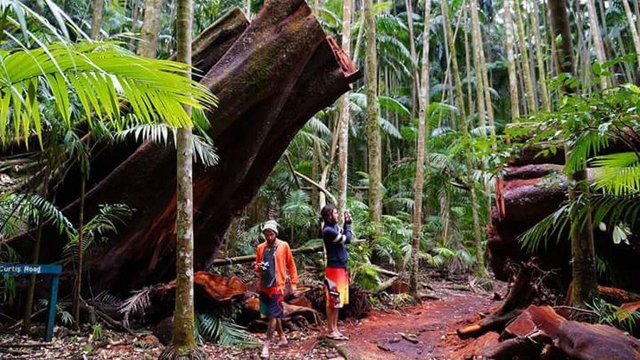 Rainforest Queensland Jungle Jungle Trekking Travelaustralia Travel Holiday Tamborine