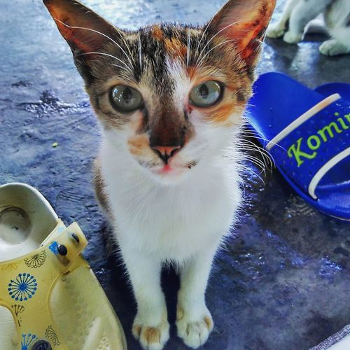 :3 Cat Cats Ig Instagram Cute Animal Wwf Catgram Cutegram First Eyeem Photo