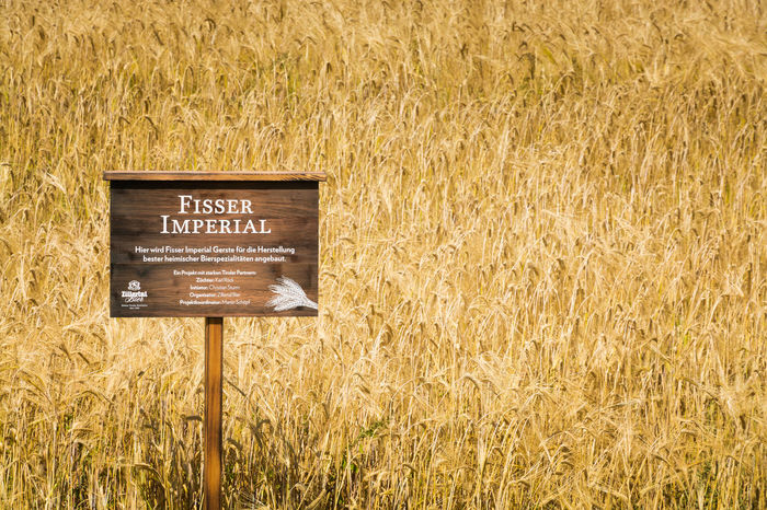 Agriculture Beer Fisser Imperial Barley Barley Field Beer Ingredients Brewing Close-up Communication Crop  Day Field Grass Growth Harvest Information Land Malt Nature No People Outdoors Plant Rural Scene Sign Western Script