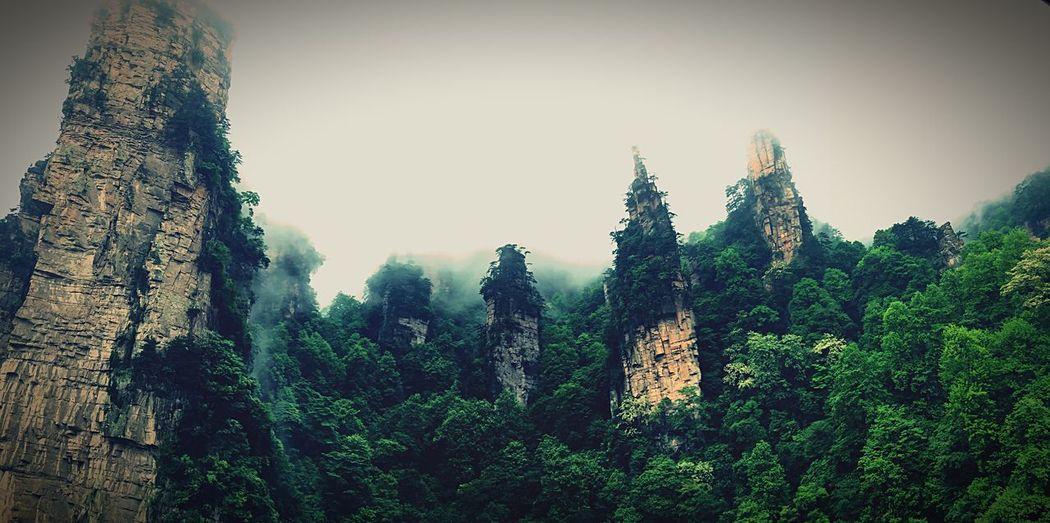 Adventure Club Avatar Avatar Mountain Zhangjiajie China Changsha Changsha,China Mountains Sky Mountain View Mountains And Sky Peakview Trees Tree Mountain Forest Forest Photography Forest In Mountain Avatar Mountain Highlands IPhoneography Iphonephotography IPhone Photography Iphone6s Iphone Panorama