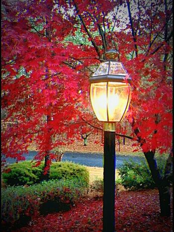 Lamp Post Tree Lighting Equipment Illuminated Nature Beauty In Nature Garden Architecture Peaceful Spaces Garden Path