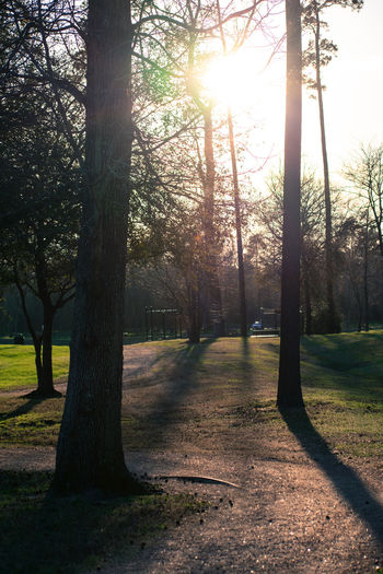 Trees in park during sunset