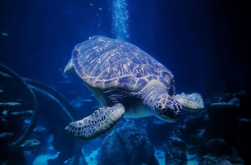 Beautiful creatures Blue Creatures Of The Sea EyeEmNewHere Whale Shark Turtle Aquarium Animal Markings Animals In Captivity Zoo Coral Reef