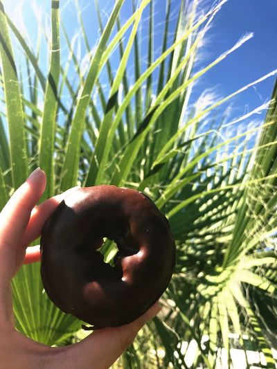 Daylight Donuts¤ Donut Growth Plant Green Color Nature One Person Holding Food And Drink Healthy Eating