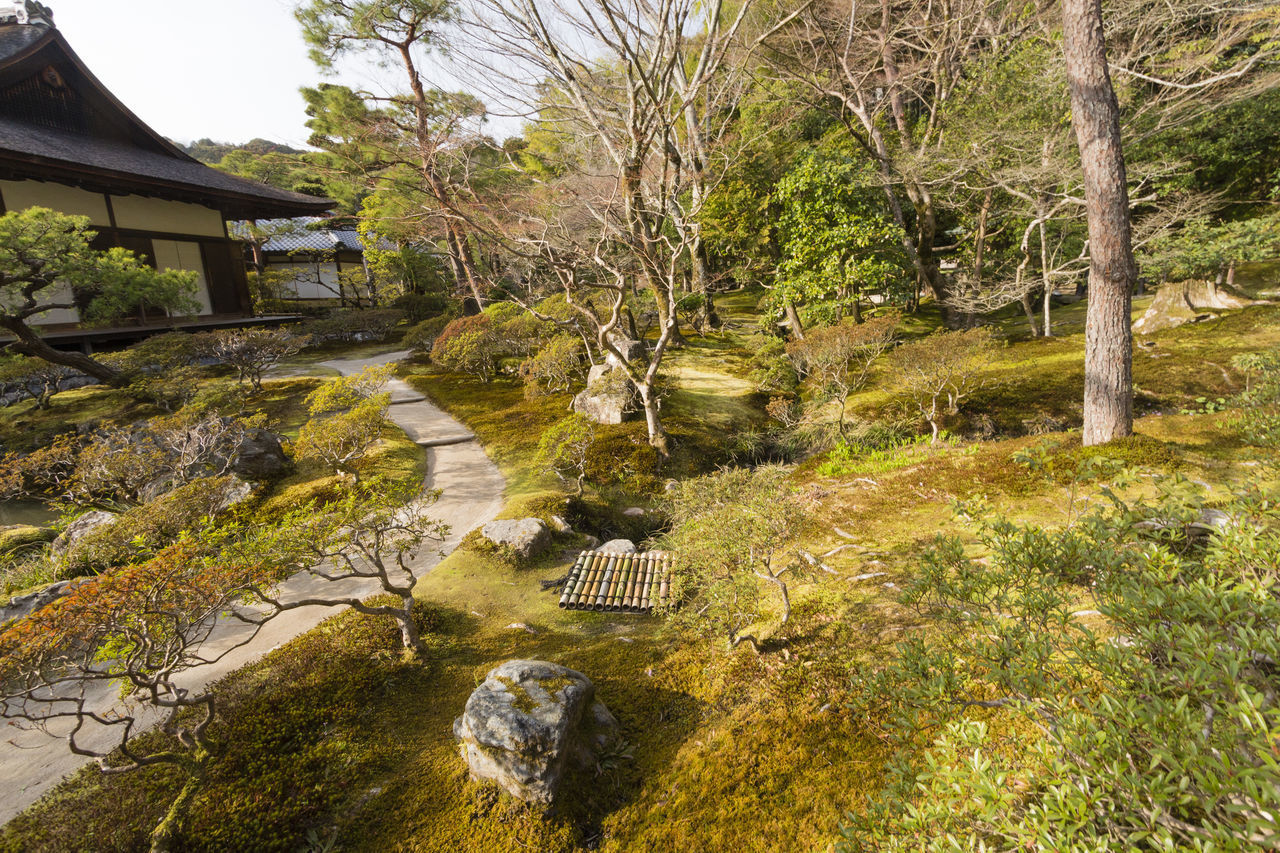 tree, plant, nature, no people, water, tranquility, architecture, rock, day, beauty in nature, built structure, japanese garden, tranquil scene, solid, growth, land, landscape, formal garden, outdoors, stream - flowing water, flowing