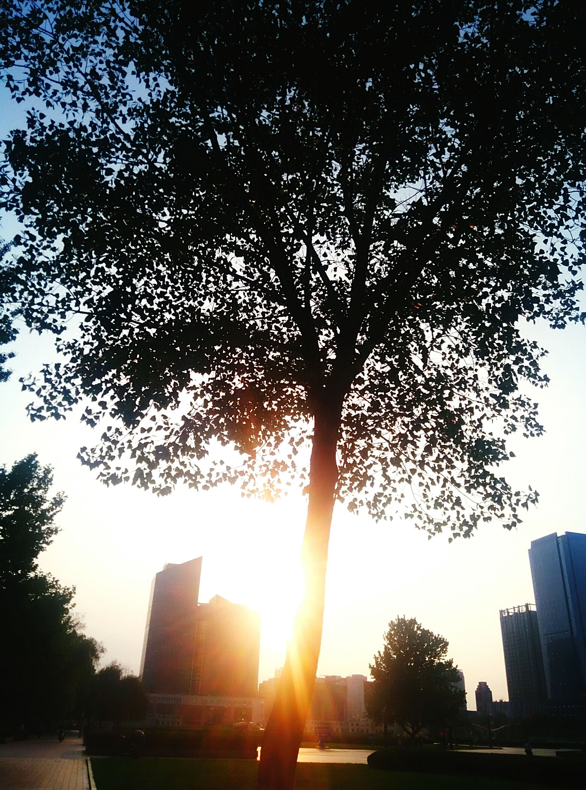 sun, tree, building exterior, architecture, built structure, sunlight, sunset, sunbeam, silhouette, lens flare, city, branch, sky, growth, low angle view, back lit, nature, outdoors, no people, skyscraper
