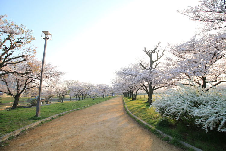 View of flowering trees and plants in park