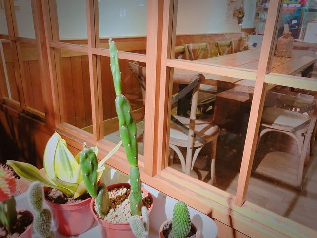 🌵🌵🌵 Coffee Shop 仙人掌 High Angle View Growth Indoors  No People Window Plant Home Interior