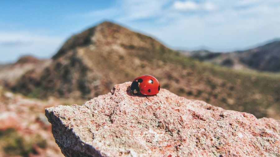 Close-up of ladybug on rock