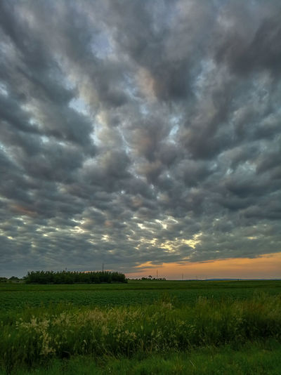 Sunset colors after a long gray and rainy season. Tree Sunset Rural Scene Agriculture Field Atmospheric Mood Sky Only Moody Sky Meteorology Dramatic Sky Horizon Over Land Romantic Sky