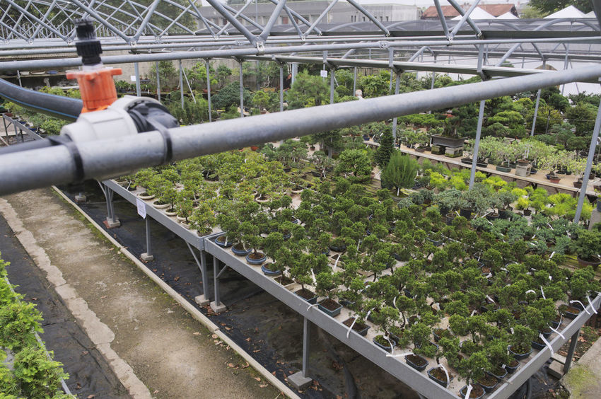 bonsai trees in a garden center Growing Irrigation Equipment Nursery Plants Trees Bonsai Garden Center Greenhouse High Angle View Irrigation System No People Nursery Garden Overview Pipes Plant
