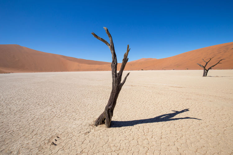 Arid Climate Atmospheric Beauty In Nature Blue Clear Sky Climate Dead Plant Desert Environment Land Landscape Nature No People Non-urban Scene Outdoors Remote Sand Sand Dune Scenics - Nature Sky Tranquil Scene Tranquility