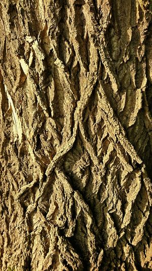 Rinde Borke Baumrinde Full Frame Pattern Backgrounds Textured  Close-up Nature Bark Pappel Pappeln No People Outdoors Braun Brown Beauty In Nature Rural Scene Perspective View Perspectivephotography Kollerinsel Kollerfähre Rheinufer Rhein Wanderlust