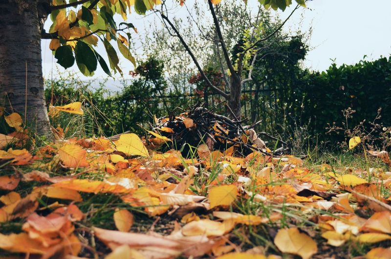 Autumn Colors Vscocam Nature EyeEm Nature Lover