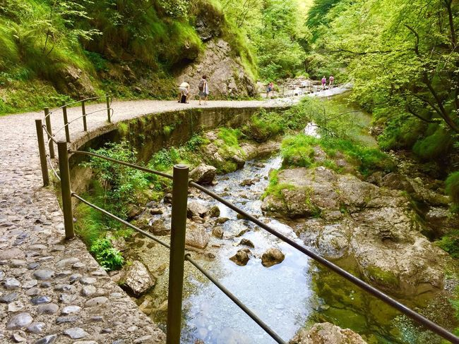 Val Vertova Water River Rock - Object Waterfall Tranquil Scene High Angle View Tree Landscape Outdoors Day Forest Footbridge Plant No People Scenics