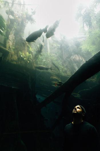 Man in aquarium