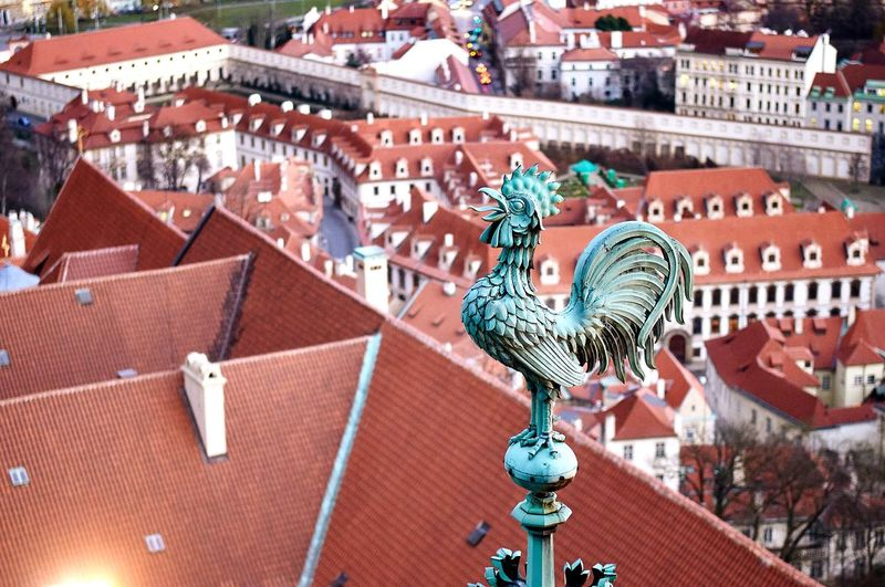 Close-Up Of Rooster Weather Vane On Top Of St Vitus Cathedral With Cityscape