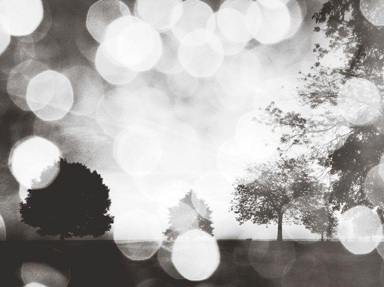 dame la mano, acompañame, camina conmigo y vamos a soñar despiertos... vamos por un poco de color en nuestras vidas...give me your hand,acompany me, walk with me, let's dream awake, lets bring some color into our lives... Cause EYEEM A Dreamer... TreePorn EyeEm Best Edits Capa Filter