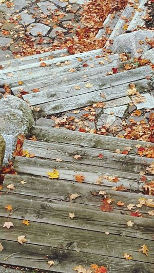 Autumn October Flagstone Path Flagstone Wood Stairs Fallen Leaves Maple Leaf Leaf Pattern Beauty In Nature No People Day Outdoors Orange Color From My Point Of View Full Frame