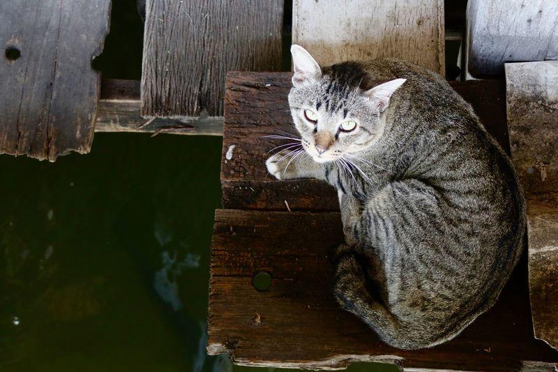 Portrait of cat sitting on wooden plank