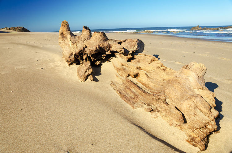 Large piece of driftwood on the beach at Lincoln City, Oregon Beach Coast Coastal Coastline Landscape Lincoln City, Oregon Nature Ocean Oregon Oregon Coast Outdoor Outdoors Pacific Rock Sand Scenics Sea Seascape Summer Travel United States USA Water Wave Wood
