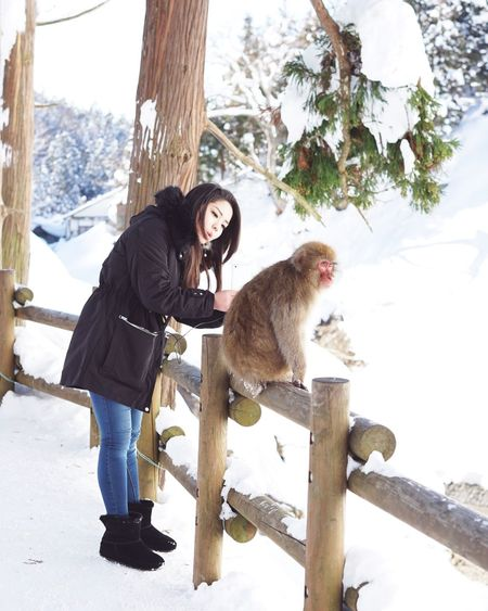 Please look at my camera! Full Length One Animal Tree Winter Animal Animal Themes One Person Snow Pets Mature Adult Japanese Macaque People Friendship Nature Climbing Only Women Monkey Outdoors Adult Adults Only Snowmonkey 地獄谷野猿公苑 Jigokudani-Snow-Monkey-Park Nagano Prefecture,Japan Travel Destinations Uniqueness Mobile Conversations