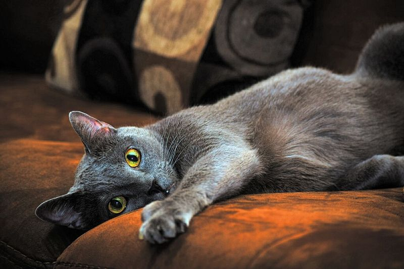 Indoor Photography Sleepy Cat EyeEm Best Shots Showcase April Speed Light Photography Owl Eyes Cat Lovers Cat Cat Eyes