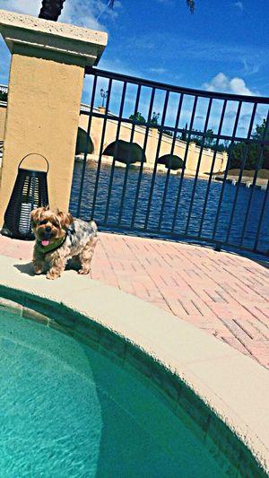 Florida Puppy Love