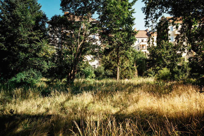 Morning light in the parc City Life Morning Morning Light Urban Lifestyle Urban Nature Berliner Ansichten Building Exterior Built Structure Day Daylight Grass Green Color Growth Healthy Lifestyle Morning Walk Nature No People Outdoors Park Plant Residential District Sunlight Tree Urban Urban Life