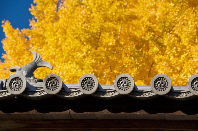 Low angle view of buddhist temple roof against autumn trees