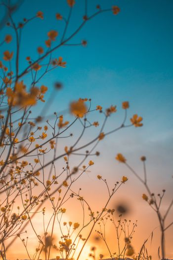 Low angle view of flowering plants against sky during sunset