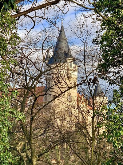 Castle Tree