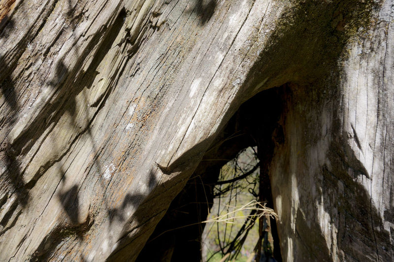 Hiking Trees Tree Trunk Textures And Surfaces Texture Light And Shadow Cypress Cypress Trees  Nature Scenics Wood