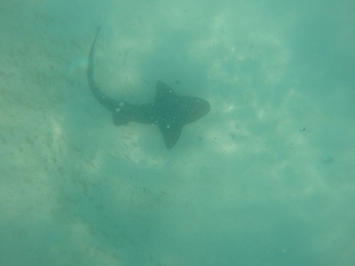 Shark Underwater Animal Wildlife Animals In The Wild Swimming