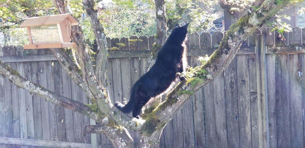 where's the birds Cat Hunter Peeping Tom Bird Hunting  Team Droid Tree Pets Wood - Material Animal Themes