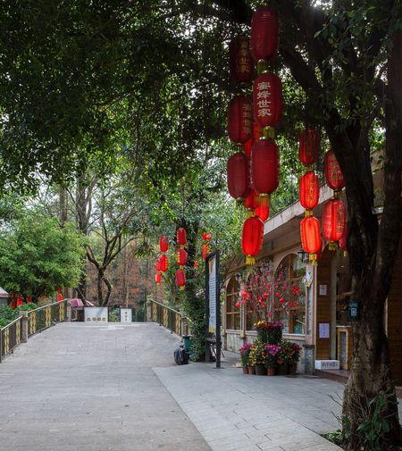 好心情(1) Red Tree Lantern Outdoors No People Green Color Chinese New Year City Nature Day Growth Architecture