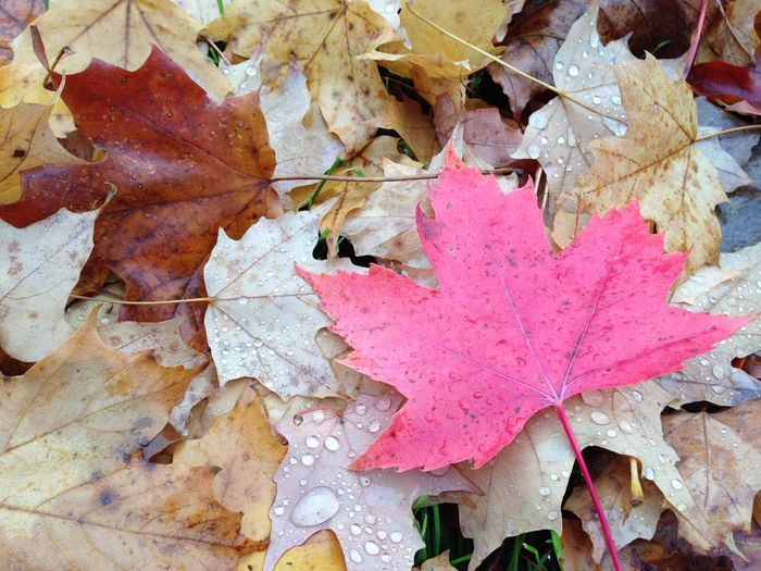 Maple leaf Full Frame Backgrounds No People Plant Part Day Textured  Outdoors Autumn