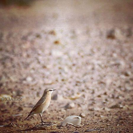 Bird Burds طير طيور Colorful Cute HDR Nature Photography Petsandanimals Animal Anmils تصويري  الرياض السعودية  Sonyalpha Sony A57 KSA الامارات الكويت قطر البحرين فوتوغرافي انستقرام @x3abrr Instagram