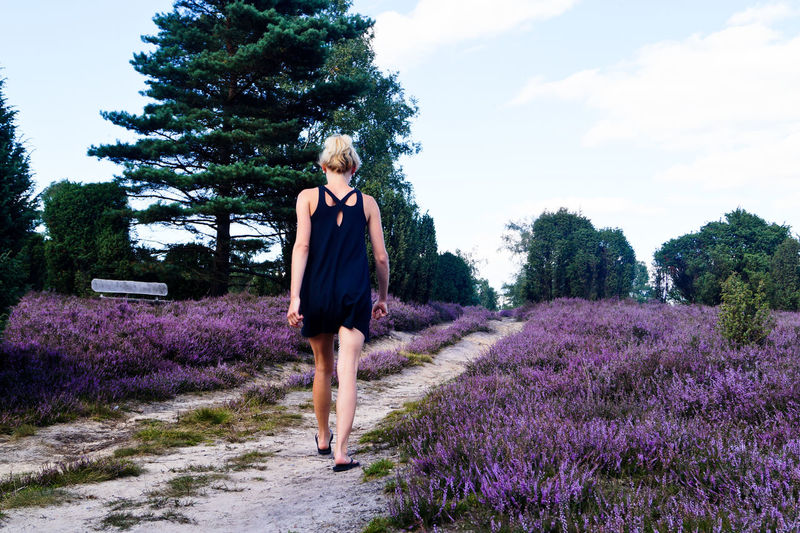 Full Length Rear View Of Woman Walking Amidst Lavender Flowers On Field