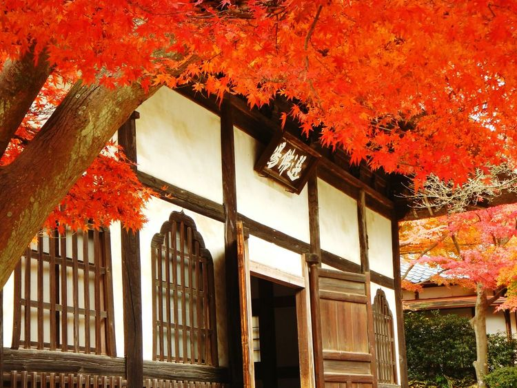 Red leaves in Engakuji. Relaxing Enjoying The View Kamakura Japan Old Nature Nature Photography AW130 Beautiful
