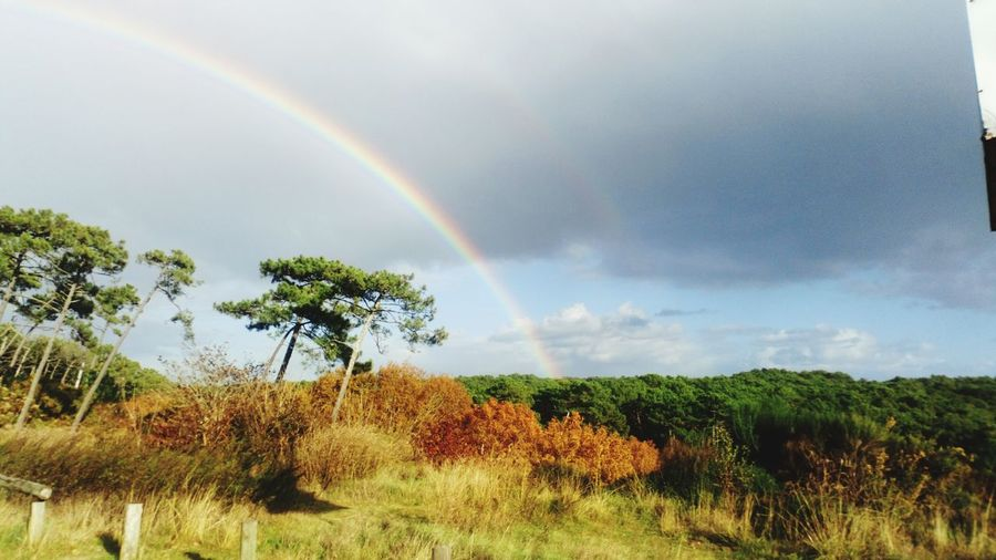 Scenics Tranquility Beauty In Nature Multi Colored Double Rainbow Nature No People Arcenciel Foest🌳 Forets Forêts Bassin D'Arcachon beauty Tranquillity Photographer Capture The Moment Community
